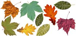 FALL LEAVES CANVAS Wall Decals REMOVEABLE CANVAS AUTUMN FALL