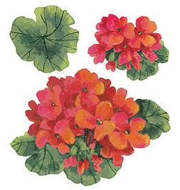 Geraniums Red large Blossom & Leaves 25 Flower Wallies Wall