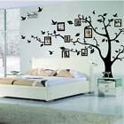 3D DIY Photo Tree Family Large Sticker Bird PVC Wall Decal M