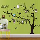 Family Tree Wall Decal Sticker Large Vinyl Photo Frame Remov