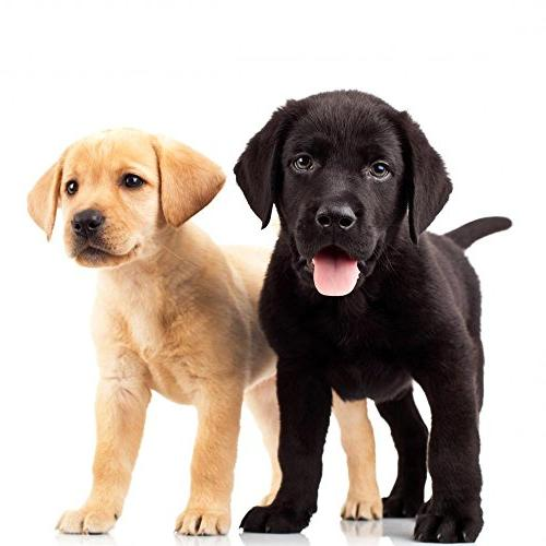 Wallmonkeys Cute Labrador Puppies Decal Peel and Graphic